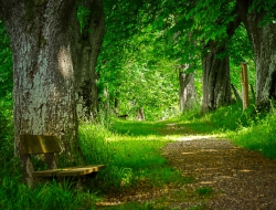 forest-path-4898501